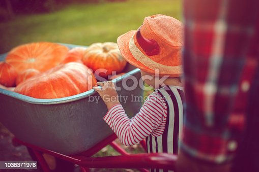 istock Cute boy with pumpkins in autumn 1038371976