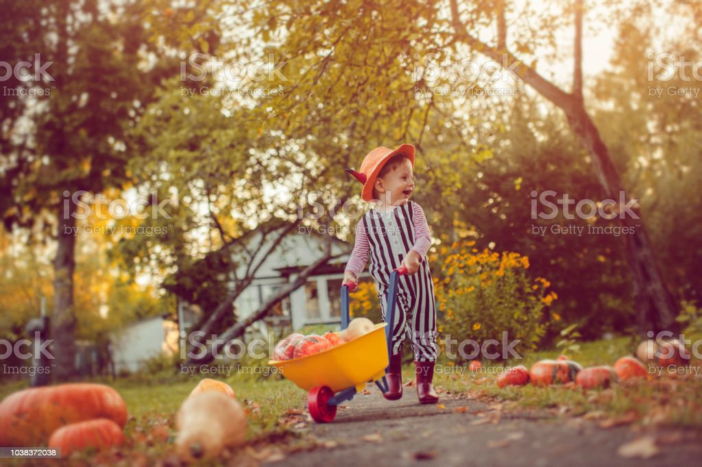 Cute boy with pumpkins in autumn stock photo
