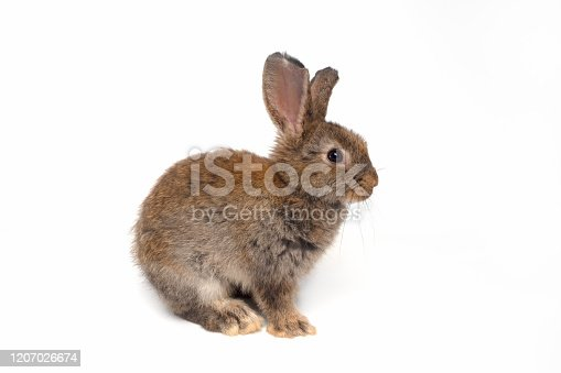 istock Cute brown baby rabbit sitting on a white background,isolated 1207026674