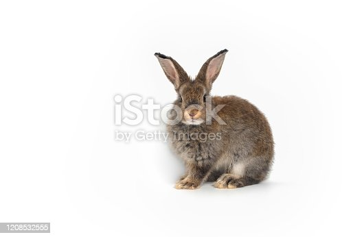 istock Cute brown baby rabbit sitting on a white background,isolated 1208532555