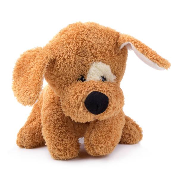 séance de mignon chien brun isolé sur fond blanc - doudou photos et images de collection