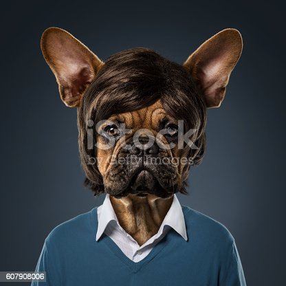 Cute bulldog portrait with fancy haircut, wearing human clothes, over blue background