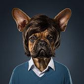 istock Cute bulldog portrait 607908006