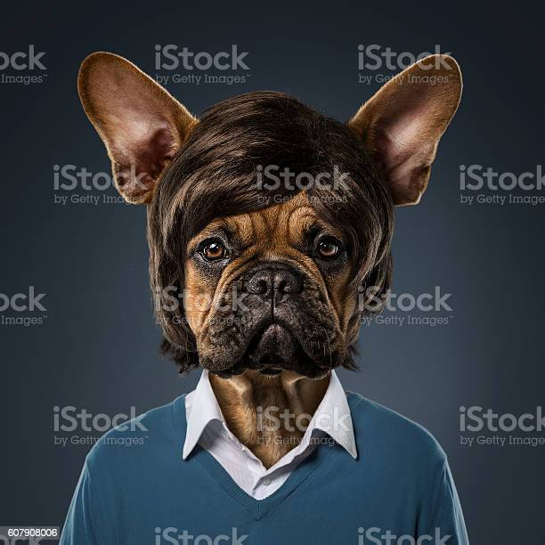 Cute bulldog portrait picture id607908006?b=1&k=6&m=607908006&s=612x612&h=so dkui12ytfu4jpfnxno1ikoksewz bnf0witqyjec=