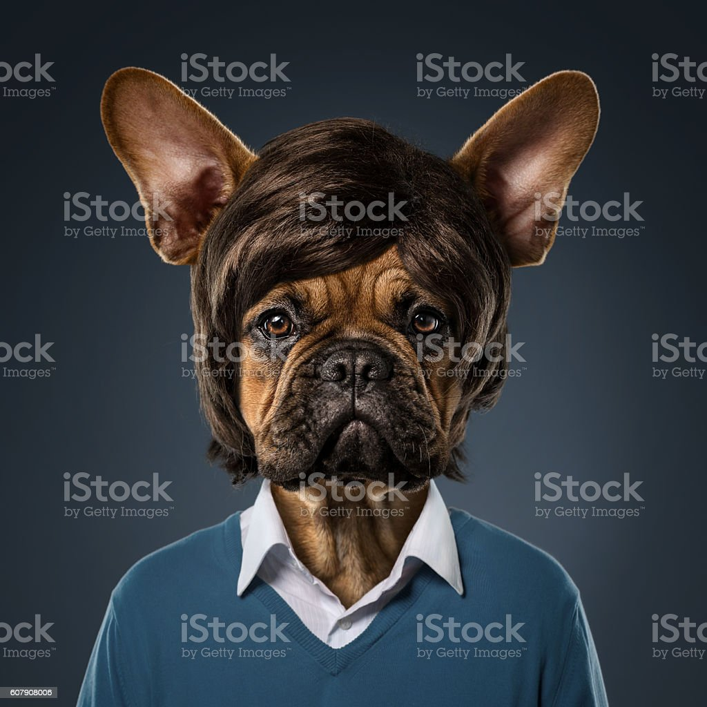 Cute bulldog portrait stock photo