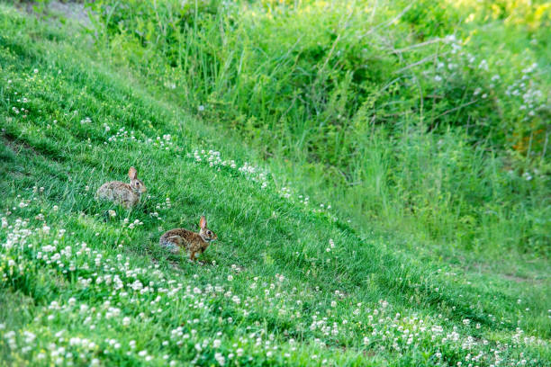 Cute bunnies on the green meadow. stock photo