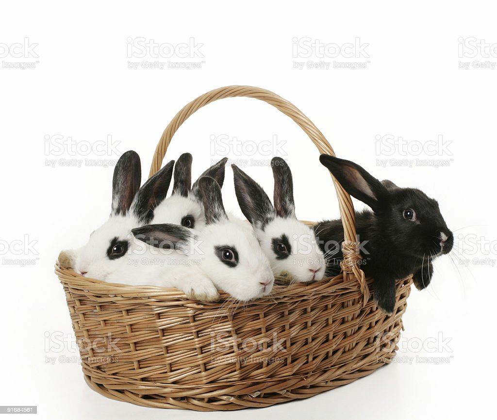 cute bunnies royalty-free stock photo