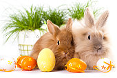 cute bunnies with easter eggs