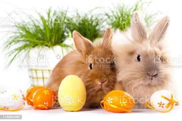 Cute bunnies with easter eggs picture id1130944567?b=1&k=6&m=1130944567&s=612x612&h=cywclnpqq fd08kp5dfzacoxzhsr 7abtr7hwbcnvzw=