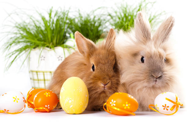 cute bunnies with easter eggs - easter bunny stock photos and pictures