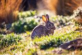 A Cute Bunny in Tekapo, New Zealand, Keeps Watch