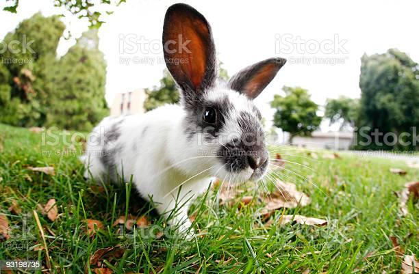 Cute bunny outdoors picture id93198735?b=1&k=6&m=93198735&s=612x612&h=l2l8zzzhjubyukuw8mnpk3jztosuwc6uyw9m6szjx0y=
