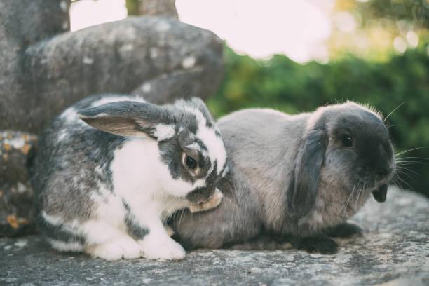 Cute bunny pet at the garden stock photo