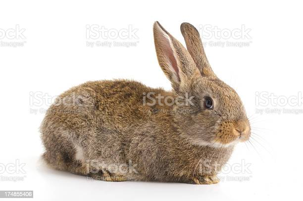 Cute bunny picture id174855406?b=1&k=6&m=174855406&s=612x612&h=jkuxmr2ethqlx59tg6znk5azm 69vam0t1lj8yn1tk8=