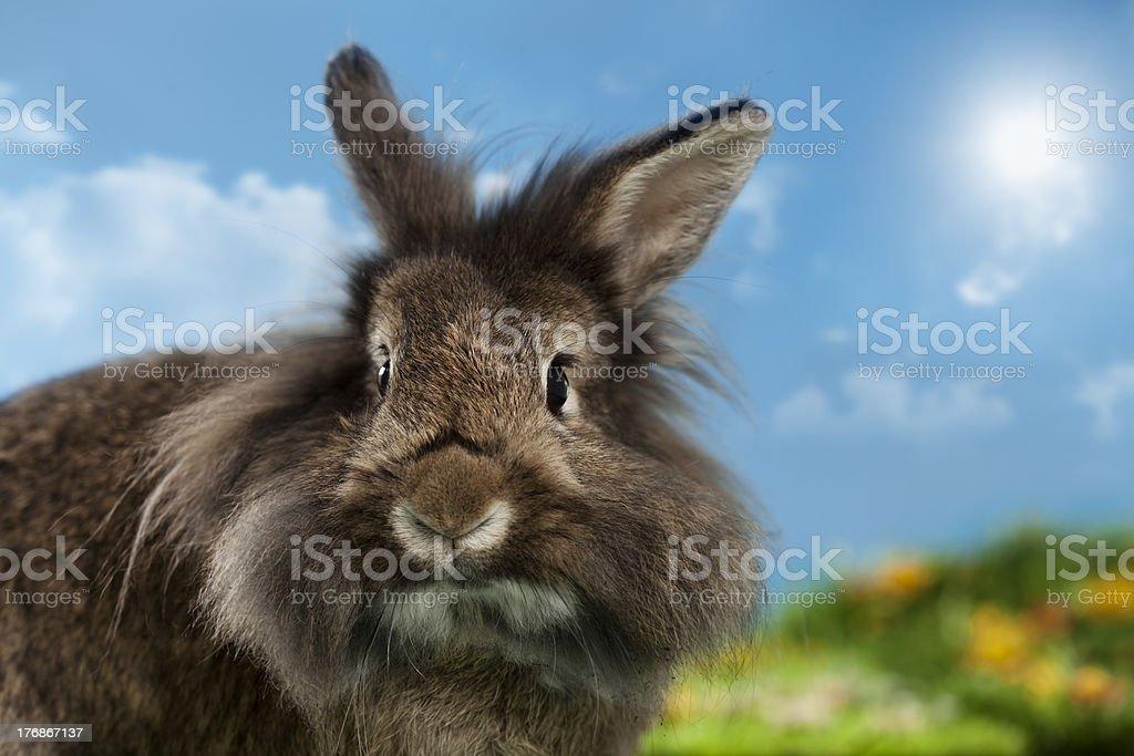 cute bunny royalty-free stock photo