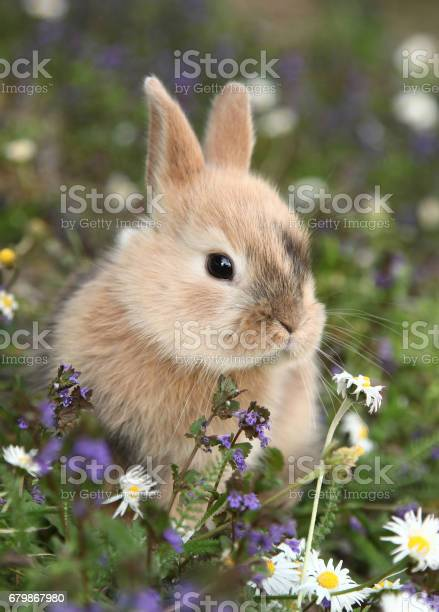 Cute bunny rabbit in colorful meadow picture id679867980?b=1&k=6&m=679867980&s=612x612&h=rajuudmv0kgicg5rb0didzkgnrfoiiqz16rbt k9bmu=