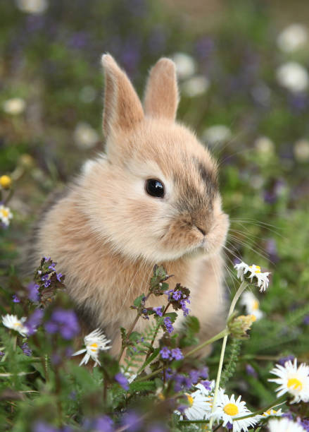Cute bunny rabbit in colorful meadow stock photo