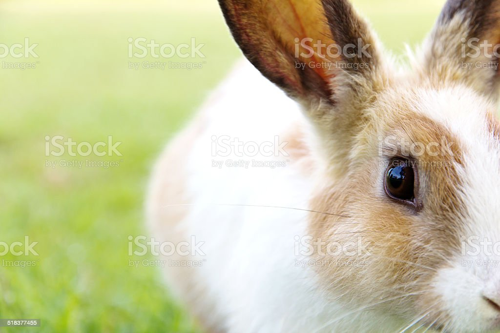 cute bunny rabbit on the grass stock photo
