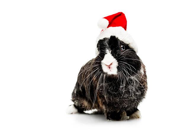 Cute bunny with santa hat picture id171591849?b=1&k=6&m=171591849&s=612x612&w=0&h=r3xc 36n8 m6eyov62gjmegk8zvx8nnv5r2duo3 8eg=