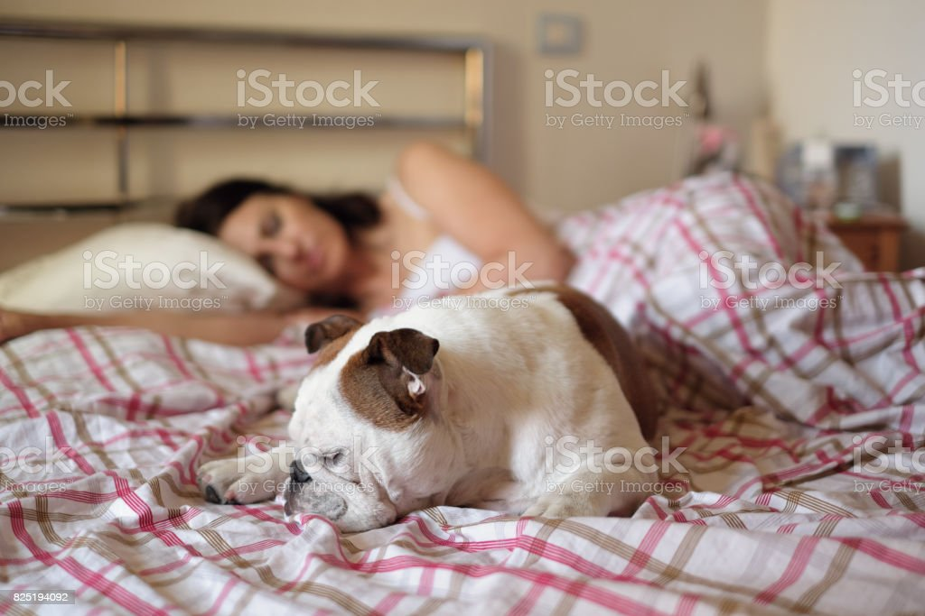 Cute calm dog on the bed of her owner stock photo