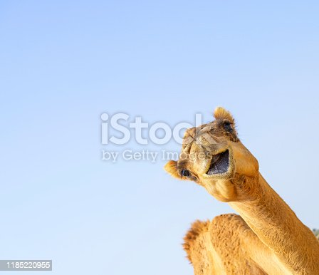 Cute young Camel brown hair head up open mouth smiling over blue sky background