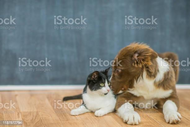 Cute cat and dog portrait picture id1137572794?b=1&k=6&m=1137572794&s=612x612&h=1bgdz4u3s0a jf5yyzfqptuzb15n 9yrabiwwvtf b8=