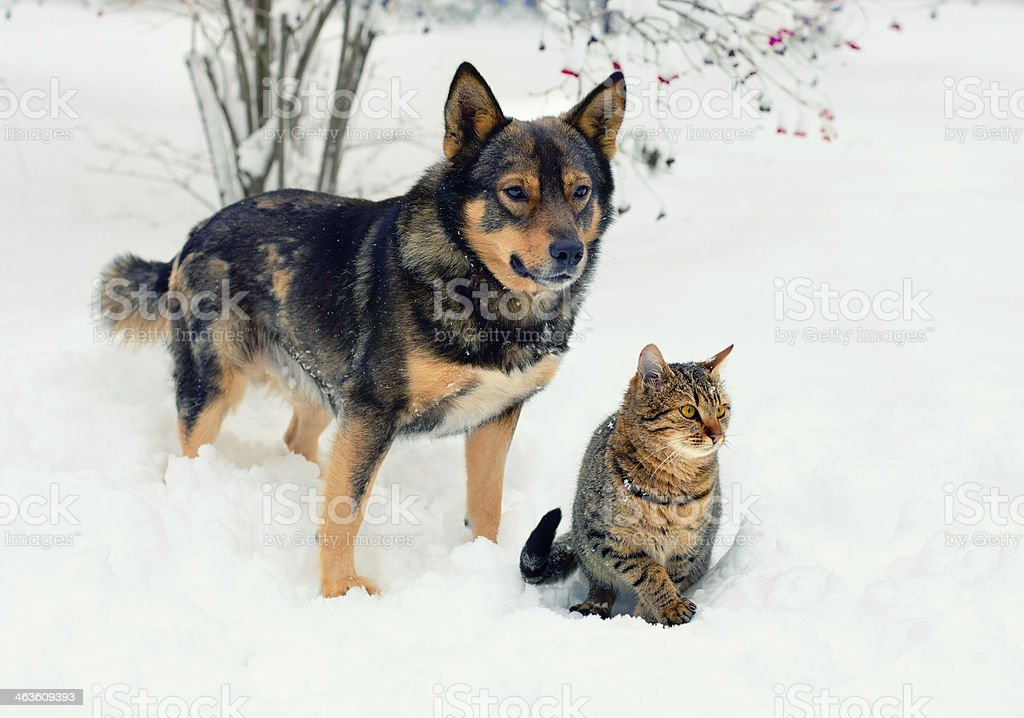 A cute cat and dog sitting in the snow stock photo
