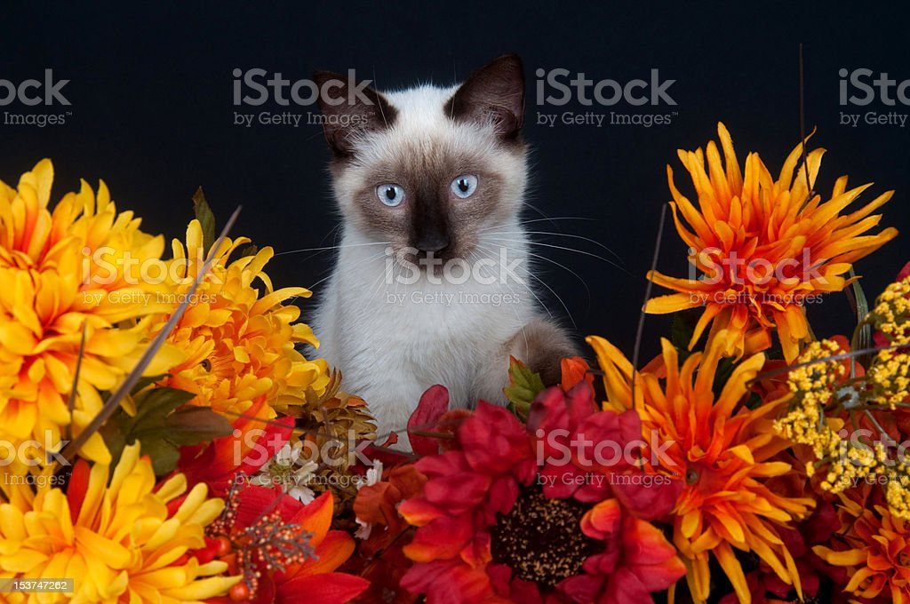 Cute cat and flowers stock photo