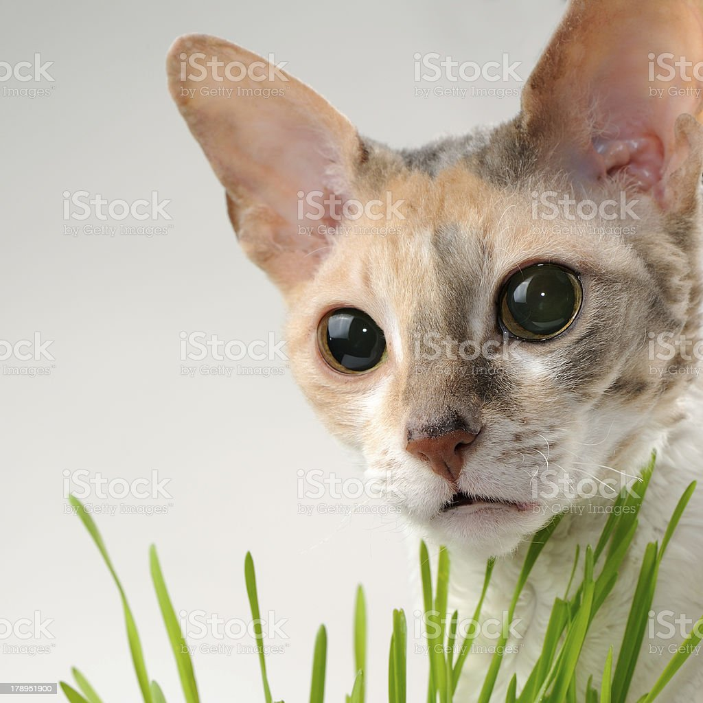 Cute Cat and Green Grass royalty-free stock photo