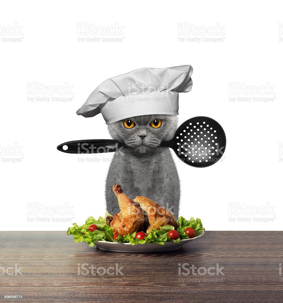 Cute cat chef is preparing chicken - Photo