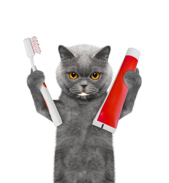 Cute cat clean the teeth with a toothbrush isolated on white picture id918195856?b=1&k=6&m=918195856&s=612x612&w=0&h=8jqqgcokm9gh8bhh zzjaokqxbzbkaws3k90gmwzkgo=
