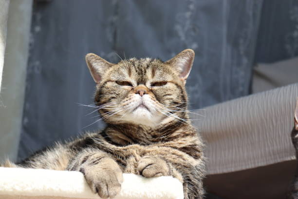 a cute cat dazzlingly looking out. - dazzlingly stock pictures, royalty-free photos & images