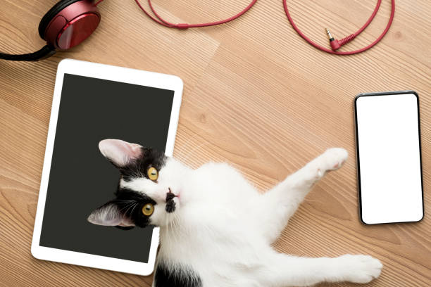 Cute cat doing mischief picture id1180837677?b=1&k=6&m=1180837677&s=612x612&w=0&h=g5j3qxnodrl9nleqta dwxlipuevzbstf5vtpqsuj 0=