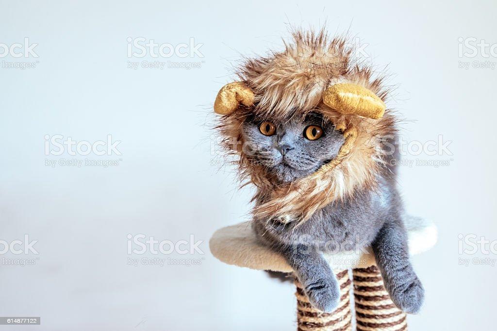 Cute cat dressed up as a lion - foto de stock