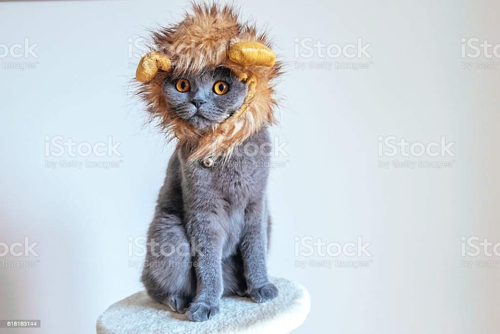 Cute cat dressed up as a lion stock photo