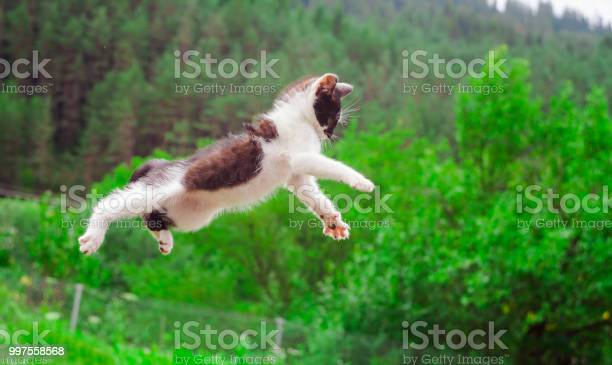 Cute cat flying and jumping in the nature picture id997558568?b=1&k=6&m=997558568&s=612x612&h=aqblqppzewxshyssr2tpol2pd wedxbqowc4gjftorq=