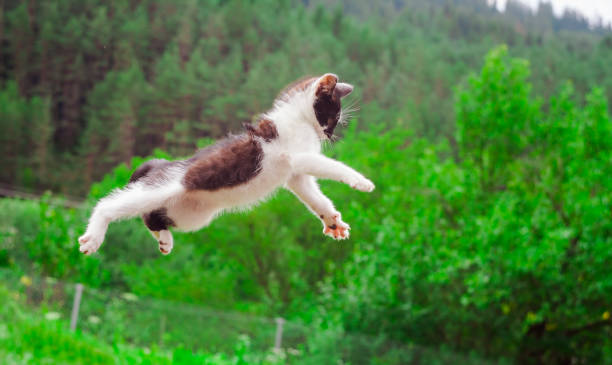 Cute cat flying and jumping in the nature picture id997558568?b=1&k=6&m=997558568&s=612x612&w=0&h=wjer8q fz24yl5ofu6egyrgdzoiypxpw4x wfhmyyb0=