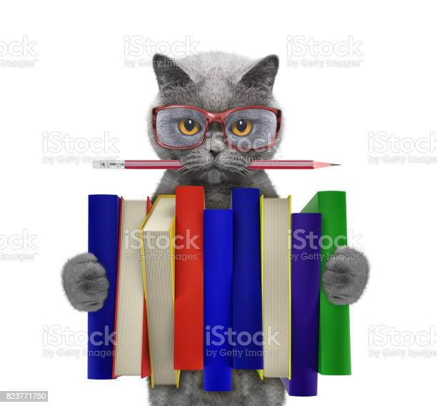 Cute cat holding a big stack of books isolated on white picture id823771750?b=1&k=6&m=823771750&s=612x612&h=gasxmlo5wvek9l5gwamidgrh1ltvuwyalnpphaj5kz4=