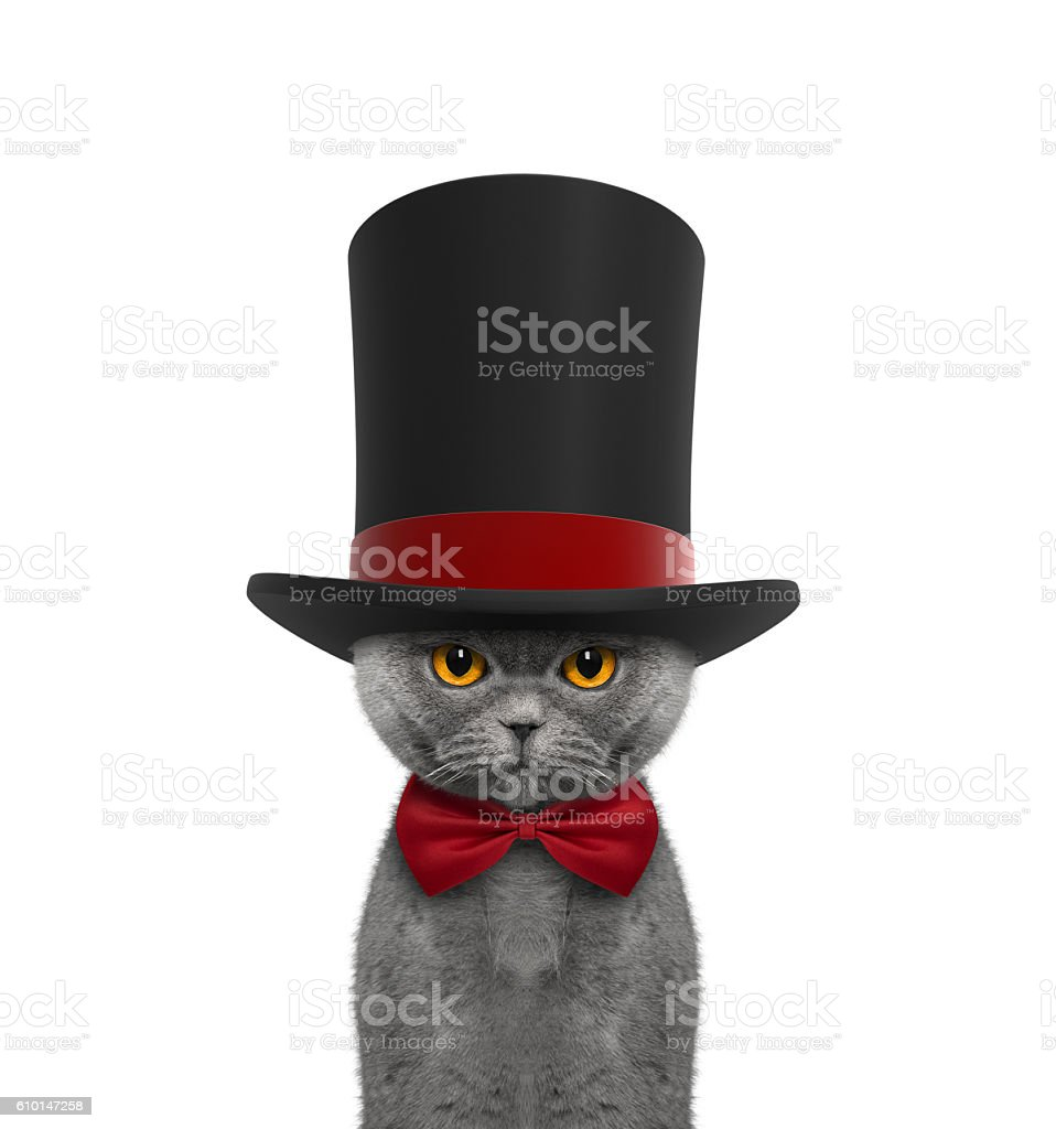 Cute cat in a high hat cylinder and necktie stock photo