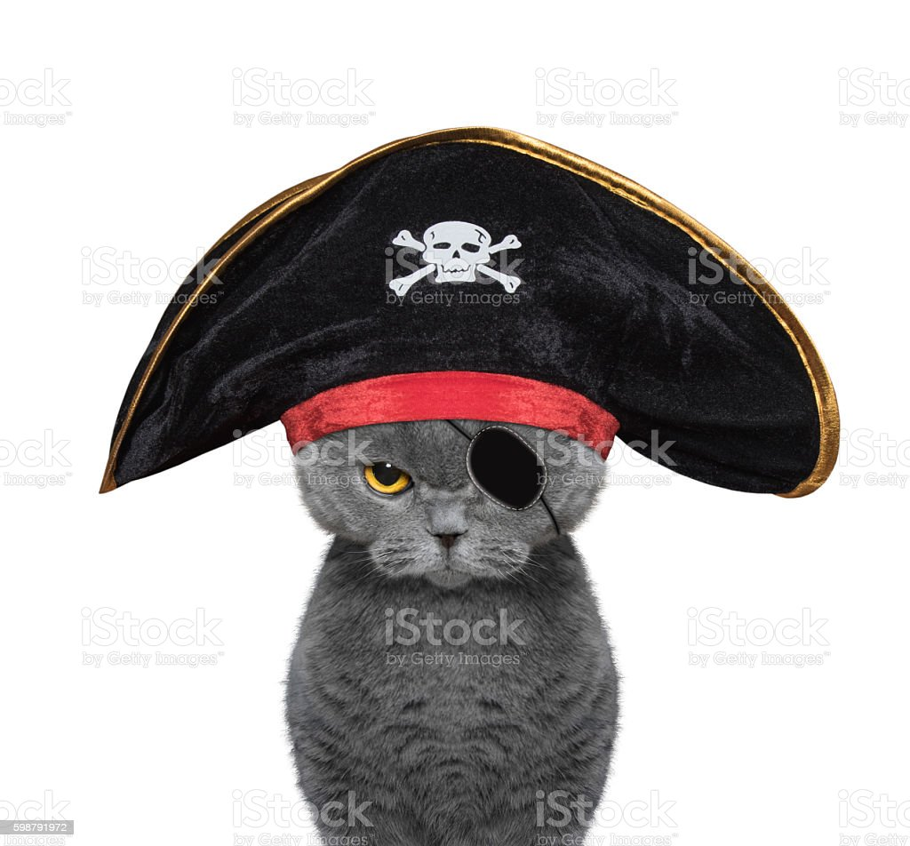 cute cat in a pirate costume stock photo