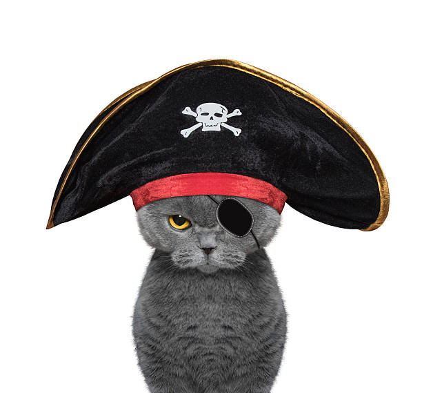 cute cat in a pirate costume cute cat in a pirate costume -- isolated on white pirate criminal stock pictures, royalty-free photos & images