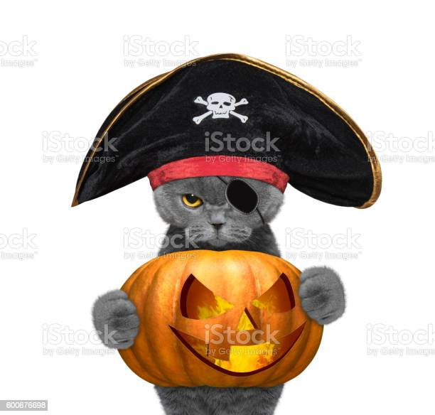 Cute cat in a pirate costume with halloweens pumpkin picture id600676698?b=1&k=6&m=600676698&s=612x612&h=uj3lvotmf3n6f8cpq9fu axmqyya2t6vnbmiajzx4vi=