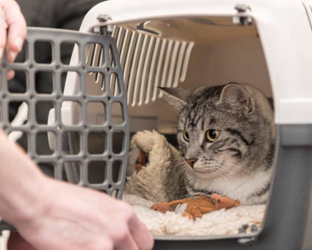 Nette Katze in einer Transportbox für sicheren Transport. – Foto
