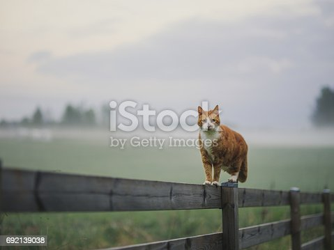 Cute cat in foggy nature scene