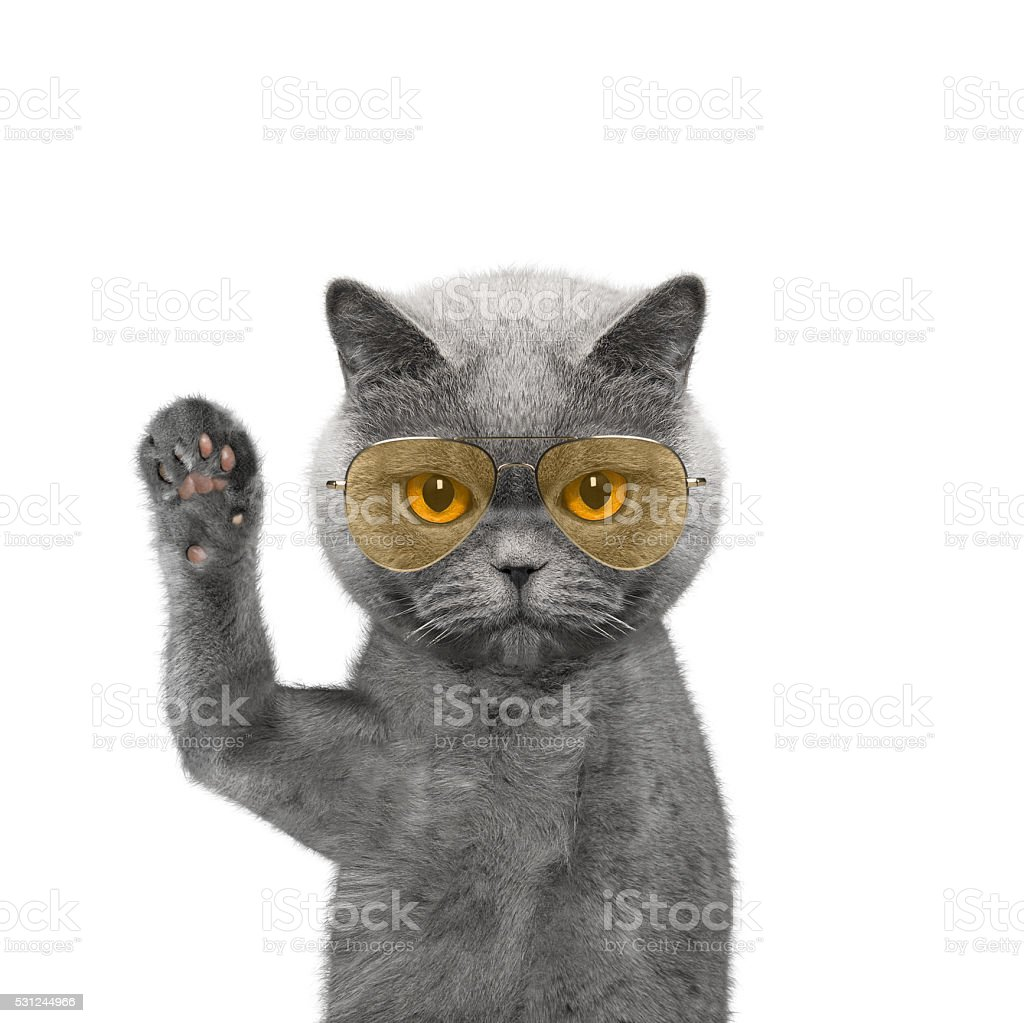 Cute cat in glasses is greeting you stock photo