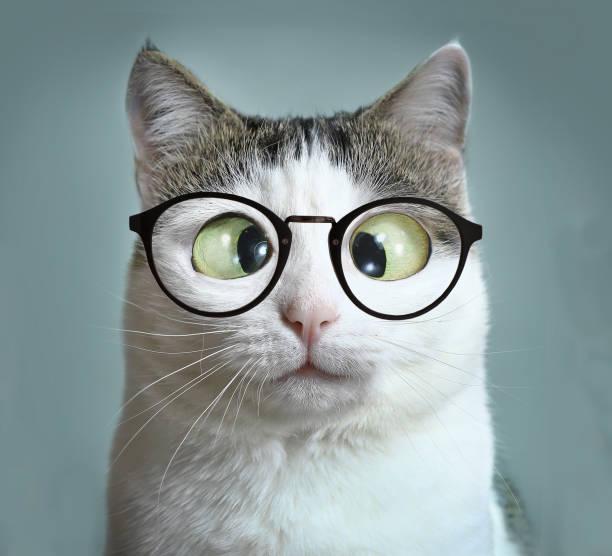 süße katze in kurzsichtigkeit brille schielen nahaufnahme lustige porträt - sprüche kalender stock-fotos und bilder