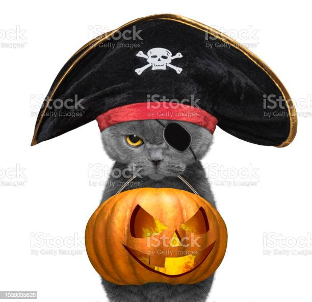 Cute cat in pirate hat hold halloween pumpkin in the mouth isolated picture id1039035626?b=1&k=6&m=1039035626&s=612x612&h=1mkweyhnd3w0pdlwoe3sfxsjniu82doikm0g0nxohlg=