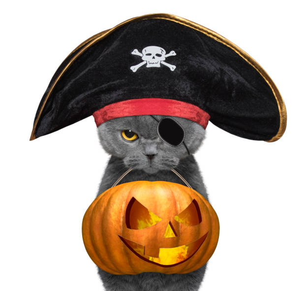 Cute cat in pirate hat hold halloween pumpkin in the mouth isolated picture id1039035626?b=1&k=6&m=1039035626&s=612x612&w=0&h=mfkfreqx3fxcegkv7ge nqnywbxo4dnykyk mvuzdci=