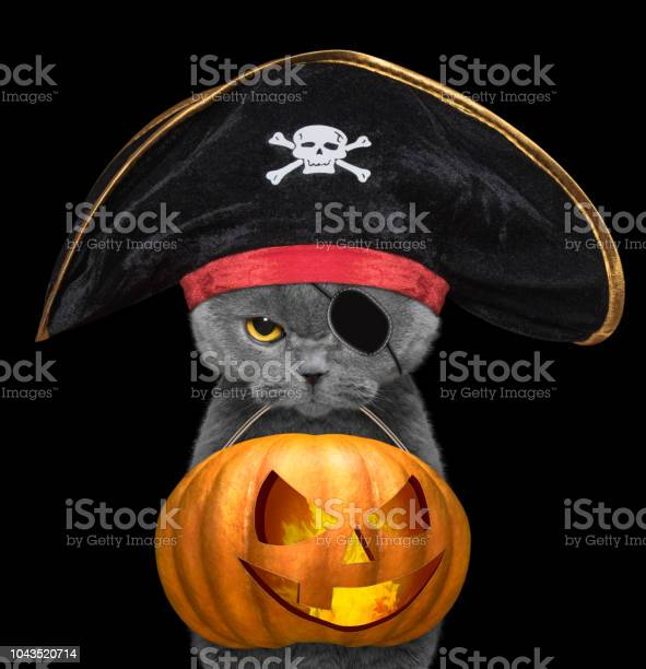 Cute cat in pirate hat hold halloween pumpkin in the mouth isolated picture id1043520714?b=1&k=6&m=1043520714&s=612x612&h=yt2l41ntb0krv26 igw rcdinyicjcs61mpa5jbkkfq=