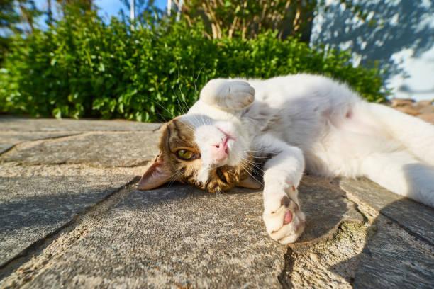 Cute cat in the garden picture id687712106?b=1&k=6&m=687712106&s=612x612&w=0&h=3f2 vriasqhg nq5yjysgj vh02d97yc7q6wkqwc9o8=